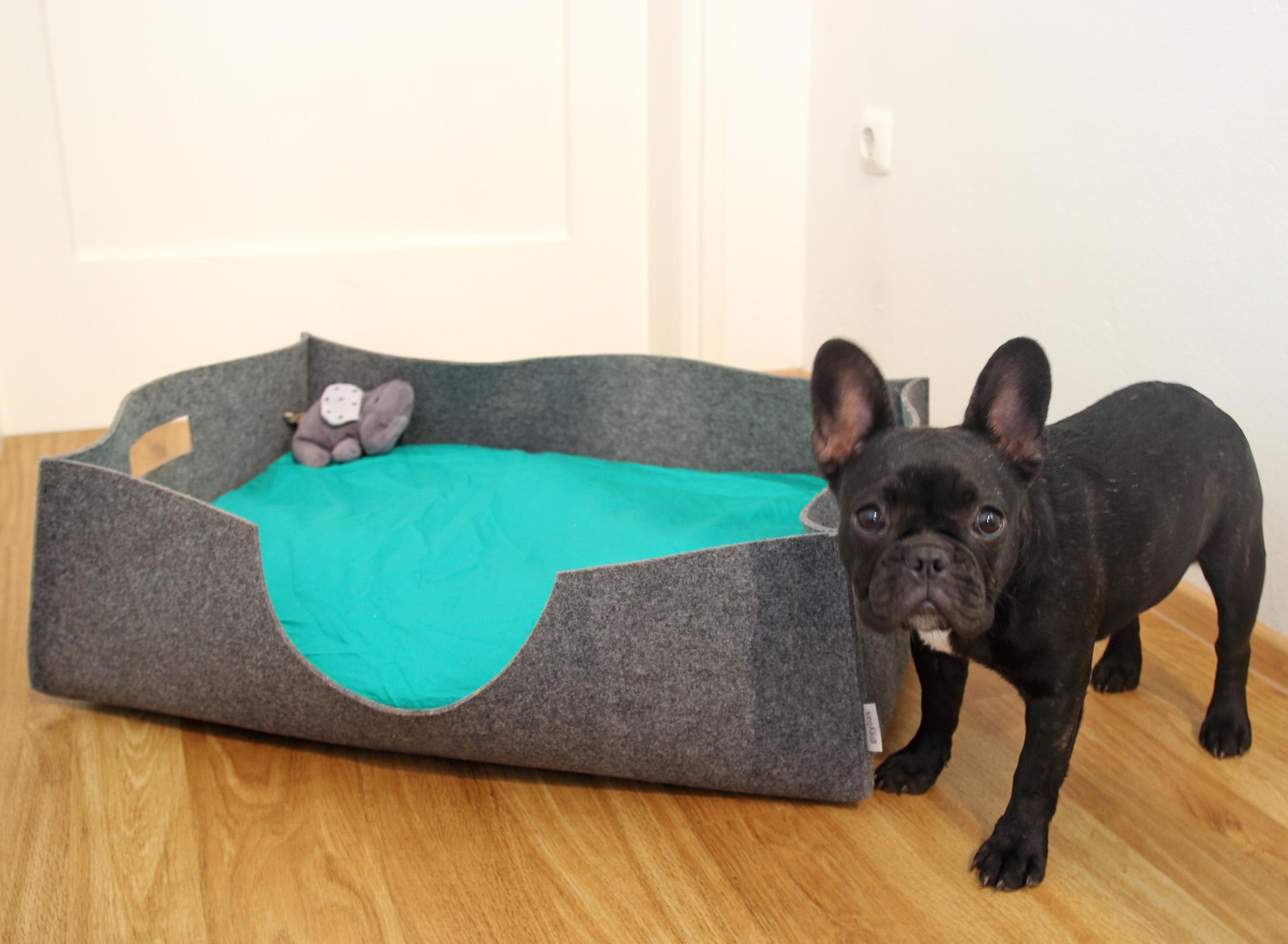 Filz,Bulldogge