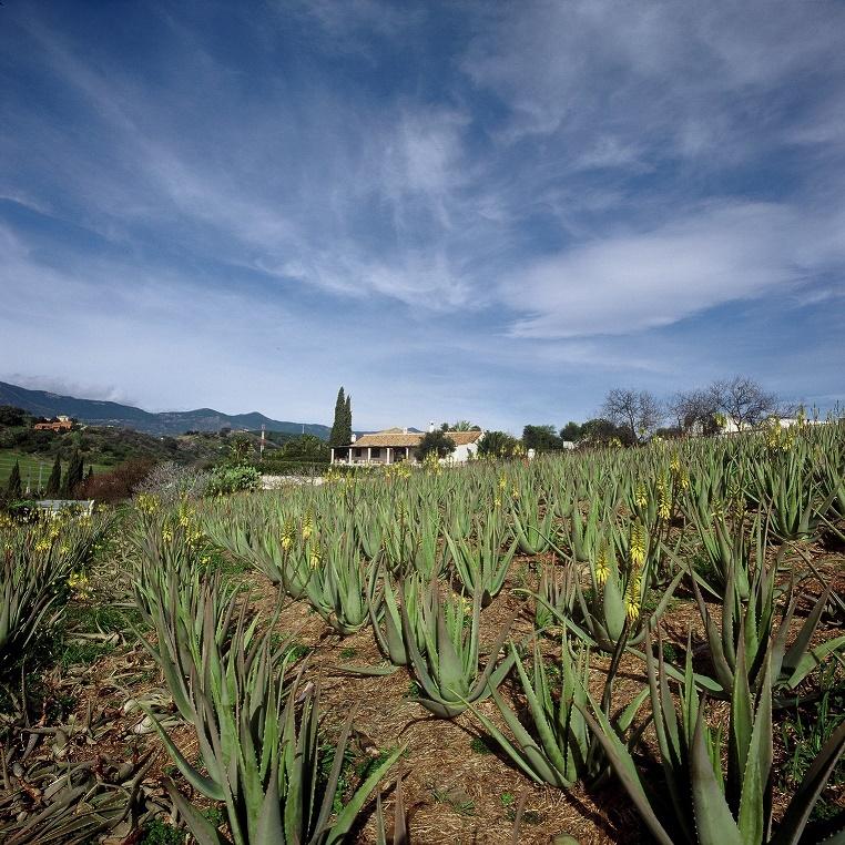 Aloe statt Aqua – Das Santaverde Rezepturprinzip
