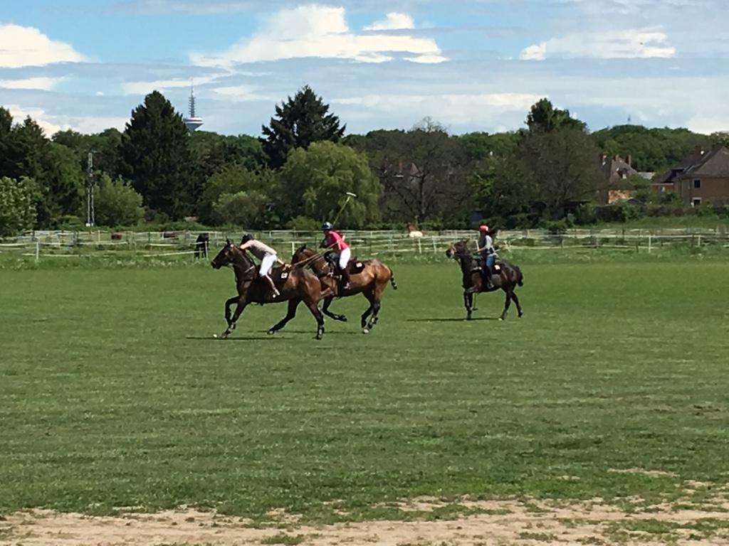 polospiel, drei pferde