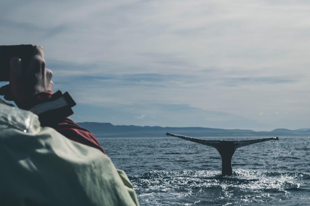 Wasser, Whale watching