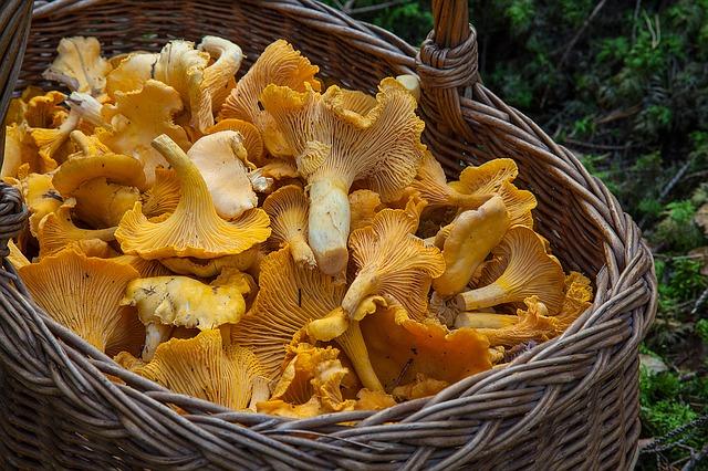 Naturkundliche Exkursion: Pilze im Herbst