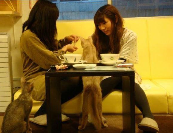 Japan,Katzen,Katzencafe