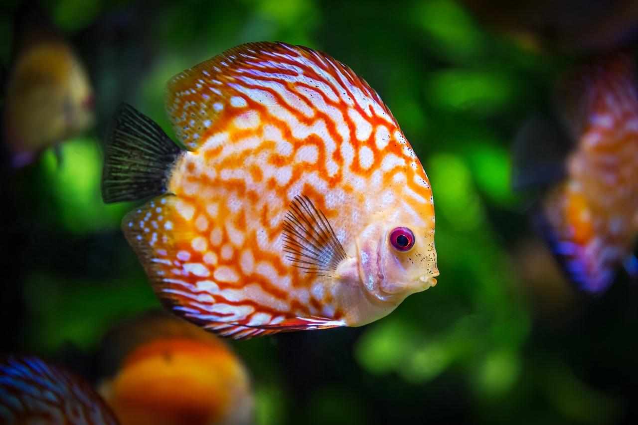 Die buntesten und exotischsten Wasserbewohner für das heimische Aquarium