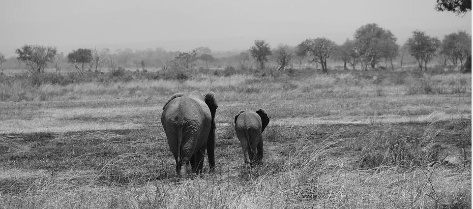 Tansania – Rundreise im Land des Königs der Löwen