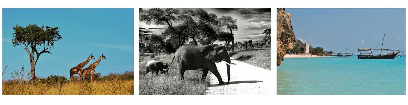 Africa,Safari,Urlaub