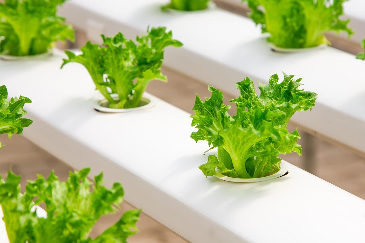 Indoor Gardening in der kühlen Jahreszeit? Die richtige Mischung aus Wärme und Licht macht es möglich