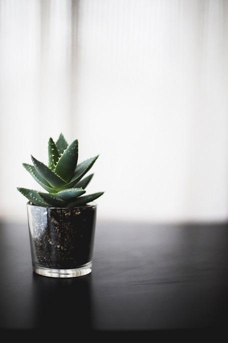 diese pflanzen lassen uns besser schlafen lic24. Black Bedroom Furniture Sets. Home Design Ideas