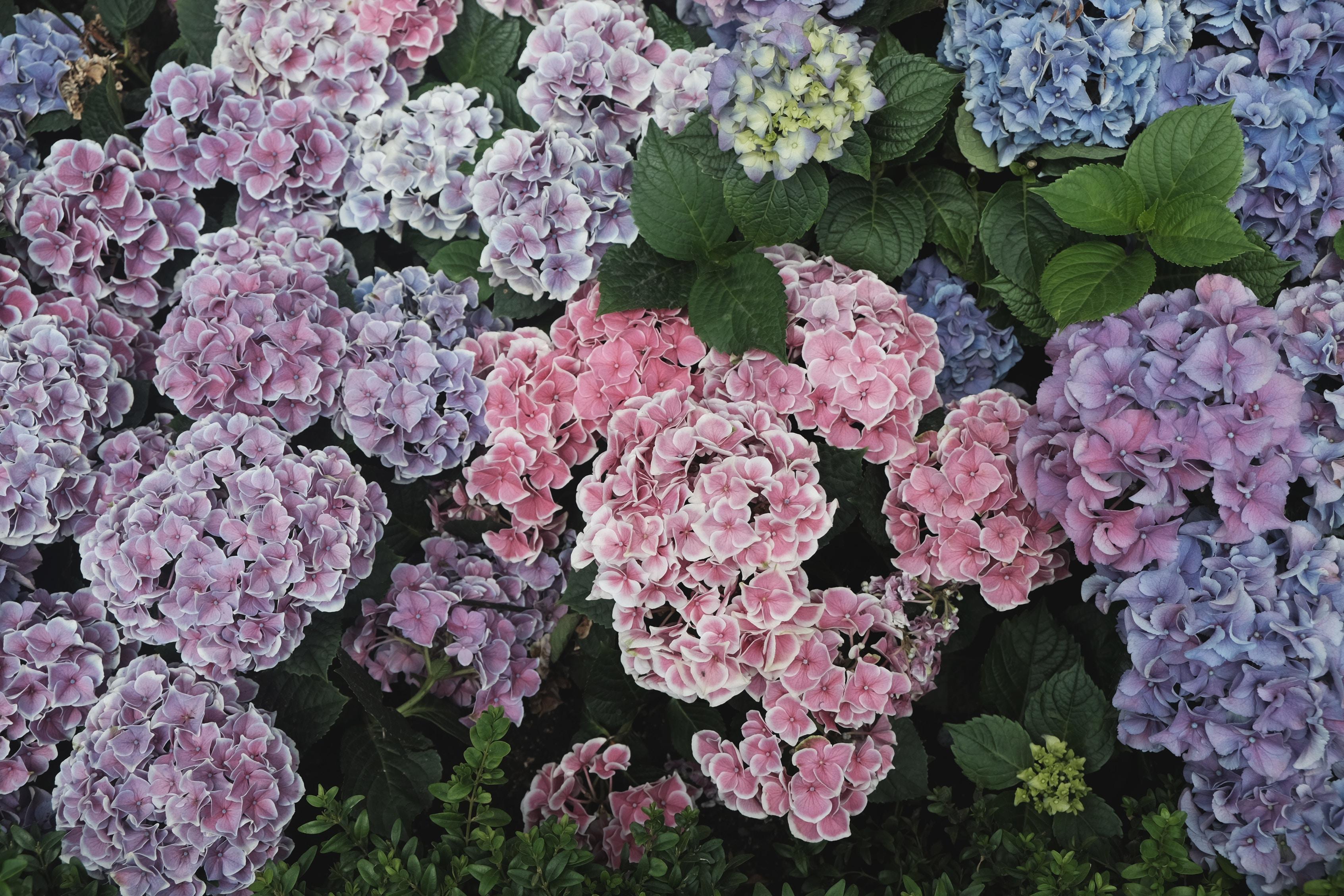 Die Sprache der Blumen – wie Pflanzen mit Tieren kommunizieren