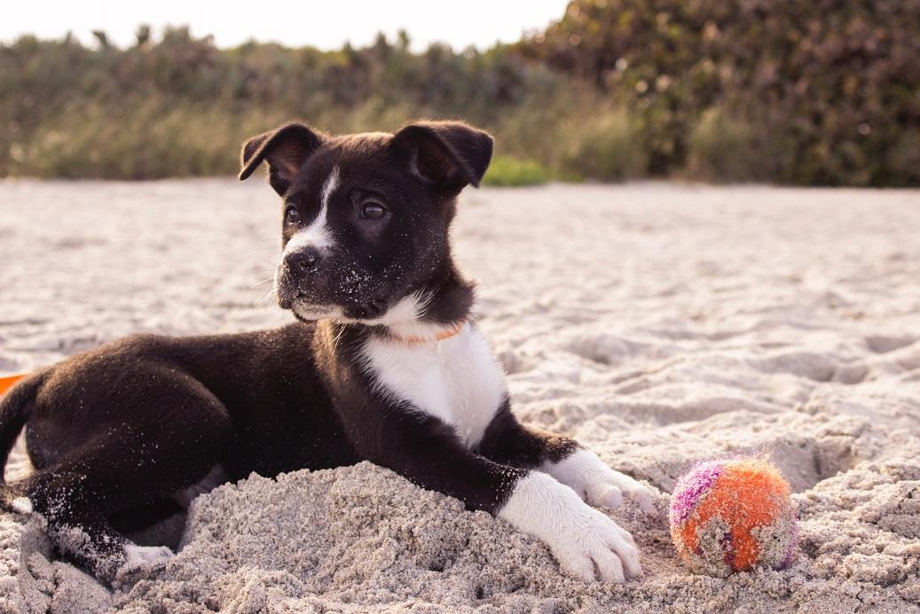 Beliebte Reiseziel in Deutschland: Der Reiseführer bringt Vorfreude auf einen Sommerurlaub mit Hund