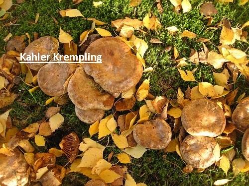 Kahler Krempling
